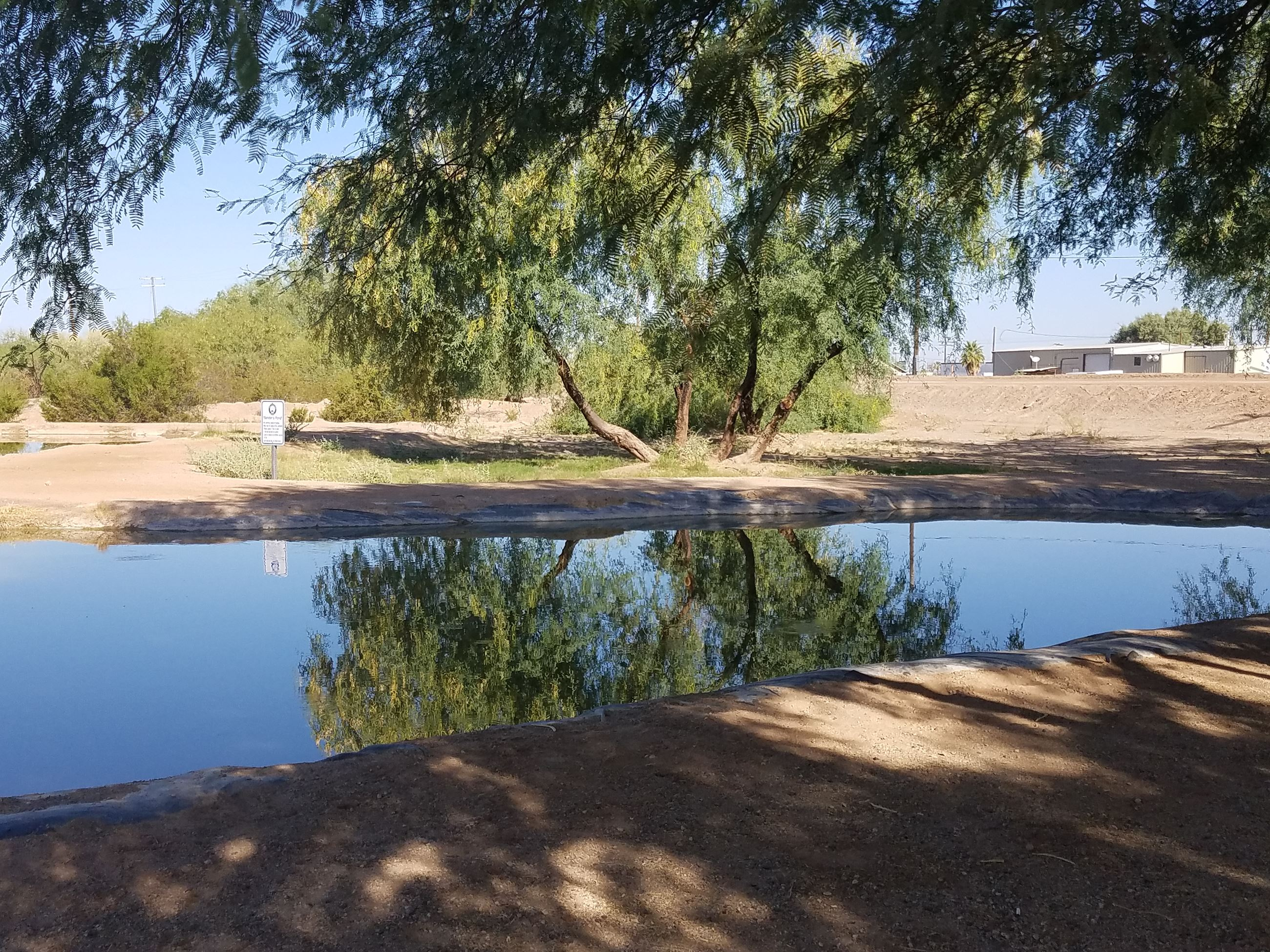 Morning under the mesquite tree at Gila Bend's Bender's Pond